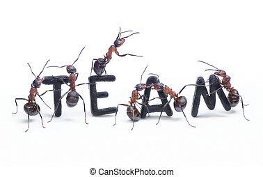 mot, construire, lettres, fourmis, collaboration, équipe