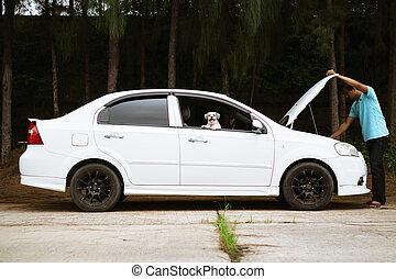 moteur, sien, voiture, chien, regarder, cassé, asiatique, cutely, accentué, homme