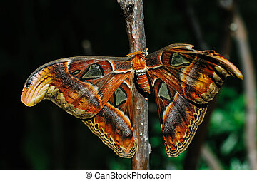 Moth - A moth is an insect related to the butterfly, both...