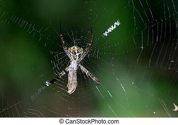 moth, attrapé, toile araignée, victime, sien