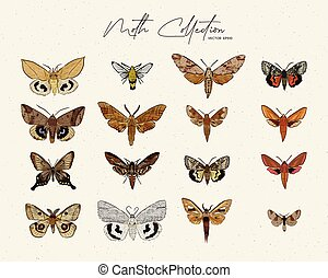 Moth collection, hand draw sketch vector.