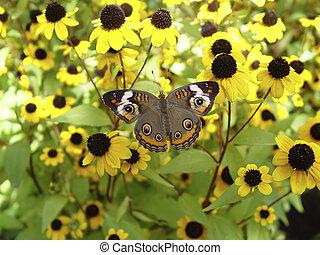 moth, colorido