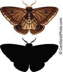 moth, couleur, ensemble, silhouette