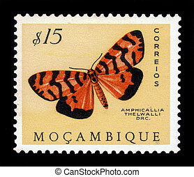 moth, famiglia, arctiidae, amphicallia, thelwalli