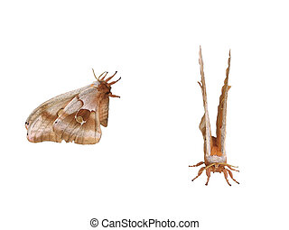 Moth - Front and side view of a moth.