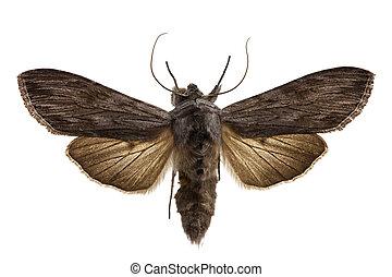 moth, haai