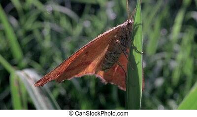 moth, liść, makro, zatkać się