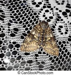 Moth on a white curtain