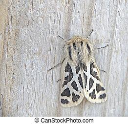 Moth on wood