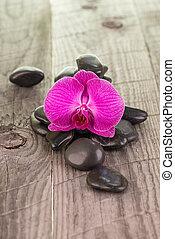 Moth orchid and zen black stones