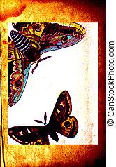 moth, papier