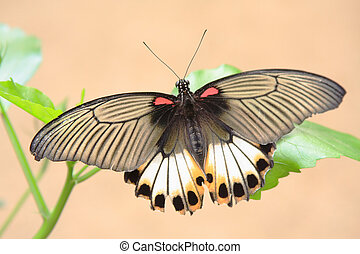 moth at a leaf