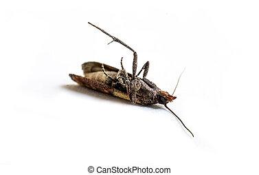 moth, tissu, macro