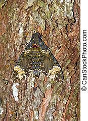 Moth tree camouflage