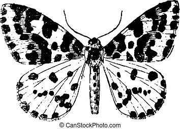 Moth, vintage engraving. - Moth, vintage engraved...