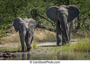 Mother and baby elephant approaching water hole