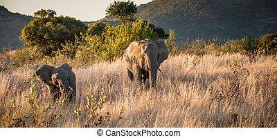 mother and baby elephant on safari