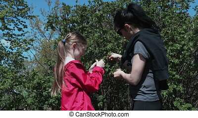Mother and daughter Explore wild rose bush