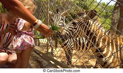 Mother and daughter feeding zebra - Woman and little girl...