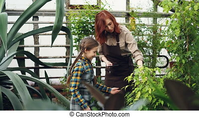 Mother and daughter modern farmers are talking, laughing and having fun while checking plants in greenhouse. Family business, agruculture and people concept.