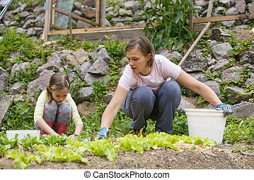 Mother and daughter working in the vegetable garden - Mother...
