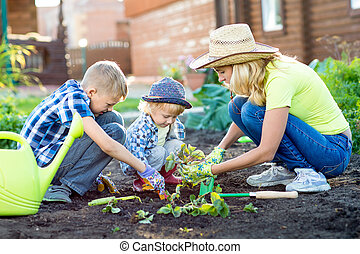Mother and her sons children planting strawberry in home garden field