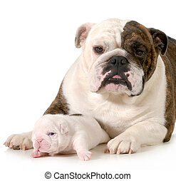 mother and puppy