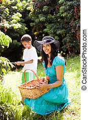 mother and son picking lychees in litchi farm