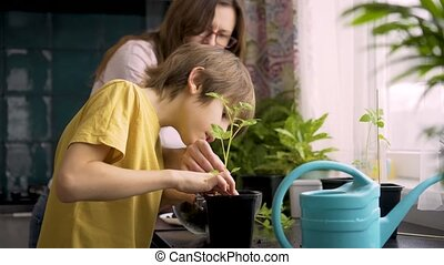 Mother and son planting seedlings at home. Mom helps the boy with potted plants. An independent child is busy with a hobby. Happy family spent time together, lifetime concept.