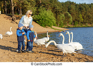 Mother and two twin brothers feeds the swans