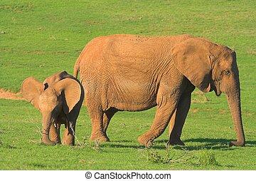 Mother & Baby Elepha