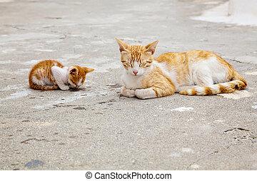 mother-cat, そして, ∥そ∥, 睡眠, 子ネコ