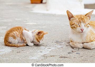 mother-cat, そして, ∥そ∥, 睡眠, 赤い子ネコ