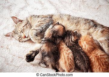 Mother cat nursing baby kittens