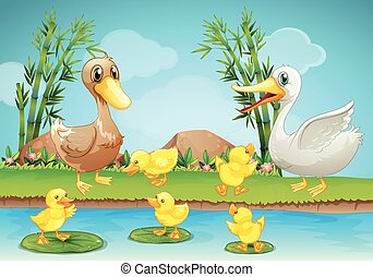 Mother duck and ducklings at the river