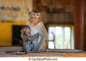 Mother monkey with baby - Mother monkey with little cute ...