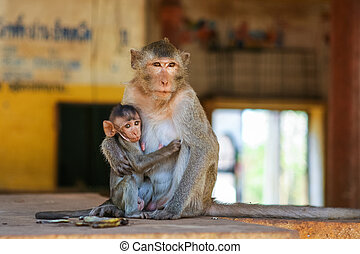 Mother monkey with baby