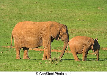 Mother Nudging - Mother Elephant nudging her baby along with...