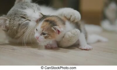 mother tricolor cat hugging little kitten takes the first...