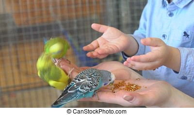 Mother With Child Feeding Parrot With Hands