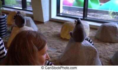 Mother with children admire lemur . Gimbal movement shot.