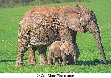 Mother&Baby Elephant