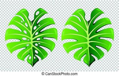 motifs, feuilles, vert, deux