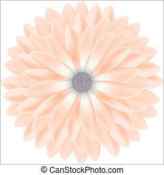 motifs, réaliste, chrysanthème, tendre, rond