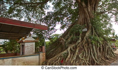 Motion around Huge Old Tree Roots with Sign - DALAT/VIETNAM...