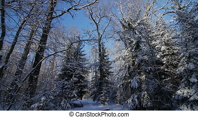 Motion by path among trees in snow covered park at winter day pov