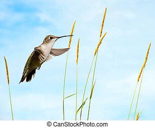 motion., colibrí