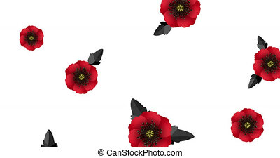 Motion graphic for Anzac Day on 25 April. Remembrance day lest we forget. Animation red poppy flowers international symbol of peace on white screen. Stock video 4k with alpha channel