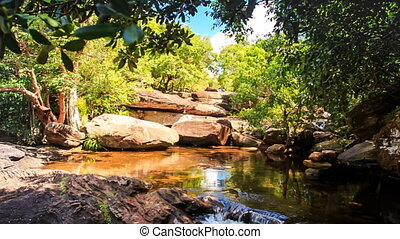 Motion to Stones by Pond in Forest Reflecting Rocks Plants Sky
