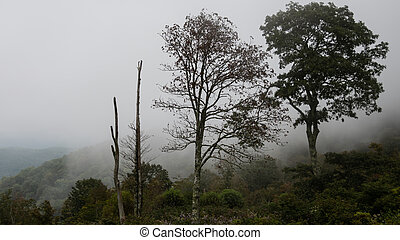 Motionless Forest Trees Enveloped in the Silent Mountain Fog